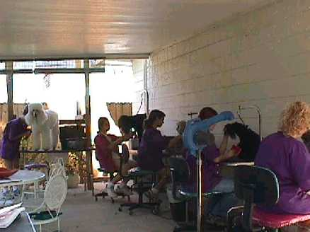 pet grooming school, tampa grooming school, grooming classes, learn to groom, dog grooming schools, internation, vocational school, vocational schools