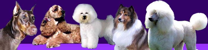 careers with animals, Pet grooming, dog school, How to groom dogs, pet grooming schools, grooming school, dog grooming school, dog grooming course, training, education, cat grooming schools, pet grooming course, career in, florida dog grooming school, grooming school florida, pet grooming school, tampa grooming school, grooming classes, learn to groom, dog grooming schools, internation, vocational school, vocational schools